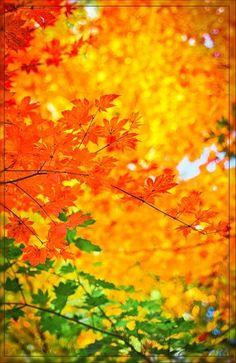 Warme Curry- , Orange- und Zimttöne, kombiniert mit leuchtendem Rot, königlivjem…