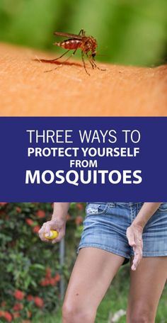 How to protect yourself from mosquitoes while you #garden