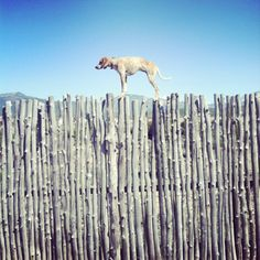 Maddie the coonhound on things. Best tumblr.