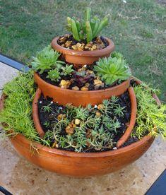 Mini jardín de suculentas en macetas rotas