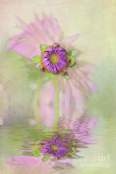 #Dahlia Bud #Reflection by #Kaye_Menner #Photography Quality Prints Cards Products at: http://kaye-menner.pixels.com/featured/dahlia-bud-reflection-by-kaye-menner-kaye-menner.html
