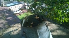 Bee removal in Johannesburg chimney