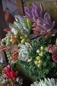 Outstanding Succulent #Gardens You Can Create at Home