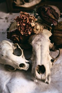 Info About using Bones in Witchcraft, Awesome post- Check it out ; Animal Skeletons, Animal Skulls, Deer Skulls, Animal Bones, Witch Aesthetic, Death Aesthetic, Necromancer, Vulture, Vanitas