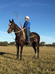 Polocrosse Horses - the Australian Stock Horse - Rosebrook Polina