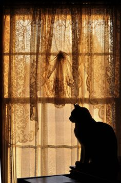 Sunlight and Old Lace   Toby sat for the longest time, just gazing at the rising sun through the lace curtain.   Julie Falk