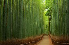 E no Japão, numa cidade chamada Arashiyama, fica essa floresta de Bamboo, chamada Sagano Bamboo Forest. O local encanta por toda beleza natural e pelo barulhinho que o vento provoca por entre as árvores de bambu…