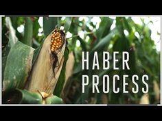 Fritz Haber (1918) Habermetoden! (Carl Bosch skalere først i 1931 metoden op til industriel brug)