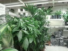 Ivy Plant Indoor, Indoor Outdoor, Outdoor Living, Lily Wallpaper, Ivy Plants, Green Plants, Mean Green, Plants Are Friends, Plant Aesthetic