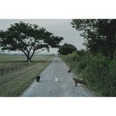 """#cat #cats #contemporaryphotography #contemporaryart #fineartphotograph #animal #animals #landscape #photo #photographs"" by rei_nakamura_"