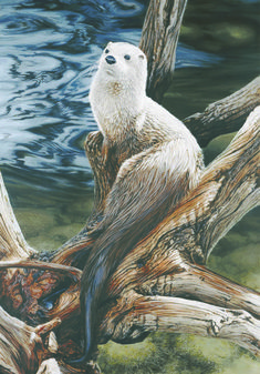 Darren Haley -Jungle Jim River Otter, Haley was born 1960 in Calgary i like this painting River Otter, Sea Otter, Ducks Unlimited Prints, Beautiful Creatures, Animals Beautiful, Baby Animals, Cute Animals, Otter Love, Canadian Wildlife