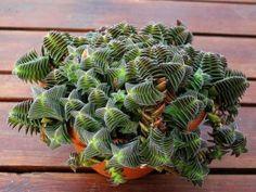 Guía de Jardinería. Información, ténicas y consejos útiles - Part 11