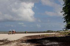 Algodoal - Ilha de Maiandeua   por expedicaopara