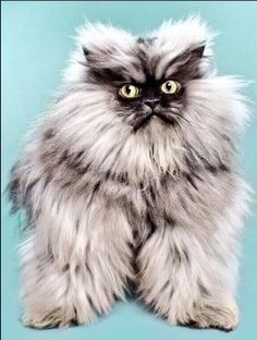 Colonel Meow Has Died.   Happy Place