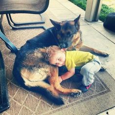 German Shepherd Adopts Human Boy in Landmark Case After nearly a year of court proceedings, a German shepherd named Cody has won the right to adopt a young boy who was displaced from his home in 2011. Cody has been caring for the boy for nearly two years, but when he decided to make it official, the adoption agency balked and the courts got involved, says Tony Shek, Cody attorney.;For starters, he's a single parent. Also, he's a dog.