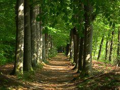 Nienoord/ Terheijl (ca. 17km) http://wandelenrondroden.nl/lange-routes-11-20km/wandelroutes/11-20km/nienoord-terheijl-ca-17km  Dezerouteleidt u via het dorp Leek naar het bosgebied van Nietap en Terheijl. Via de weidsheid van de Onlanden en het Leekstermeer loopt u via het landgoed Nienoord weer terug naar Leek.   Deze wandeling is een helft van delange route Noordenveld/ Westerkwartier (36km).