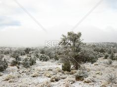view of bushes in desert. - View of plants and bushes in deserted area.