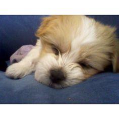 As a puppy