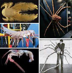 *Scary Seas: 21 Terrifying Deep Ocean Creatures - http://weburbanist.com/2012/08/03/21-terrifying-deep-ocean-creatures/