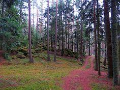 ZWalk – Wanderungen rund um Zwettl im Waldviertel (www.zwalk.at/) » Waldweg Nature, Plants, Woodland Forest, Flora, Plant, The Great Outdoors, Mother Nature, Planting, Scenery