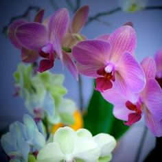 Orchids  #FlowerShop Anthropologie  beautiful orchids at Botanical Gardens, i can hear them singing their sweet flower tunes!