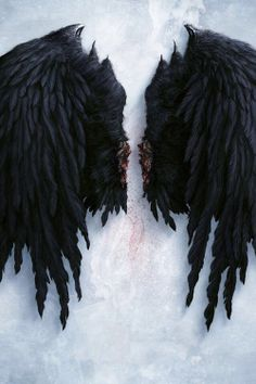 """// """"They found a pair of  wings, but no body. They say they were black. Black like yours, Eliza. Tell me, what does it mean? Is something happening? Are you in danger?!"""""""
