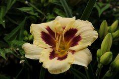 Deze bloemen en planten houden van veel zon - Libelle Geraniums, Flowers, Plants, Tips, Dragon Flies, Advice, Florals, Planters, Flower