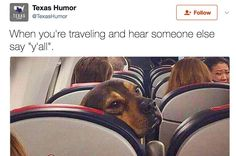 Funny and Great Dog Memes That will Make You Laugh. Here are 45 funny happy dog memes that will brighten your Funny Animal Pictures, Funny Animals, Cutest Animals, Animal Pics, Random Pictures, Dogs On Planes, Funny Cute, Hilarious, Funny Pics