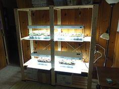 Newbie Grow Light Set-up - Growing under Lights Forum - GardenWeb