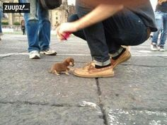 5 Dogs who don't know how small they are | The Pet's Planet