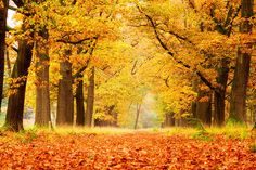 De Hoge Veluwe in de herfst is voor velen al een inspiratie geweest voor de meest schitterende foto's. Gecombineerd met de zon die door de bomen heen komt maakt dit een hele mooie foto.
