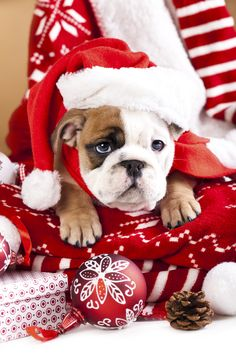What You Need to Know Before Adding a New Pet to the Family During the Holidays