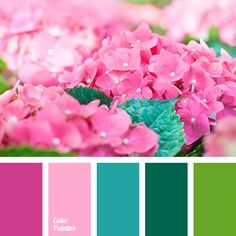 bright pink, color matching, contrast colors, dark green, emerald color, green color, hydrangea color, juicy tones, lime color, pale pink, saturated pink, shades of pink.