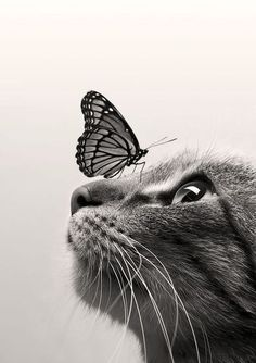 The Cat and the Butterfly.  Hey, someone could write a song about this...