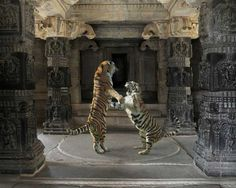 22 Stunning Photos of Animals in Exquisite Indian Palaces 40 - https://www.facebook.com/diplyofficial