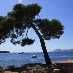 Ile Sainte Marguerite #riviera #mediterranean