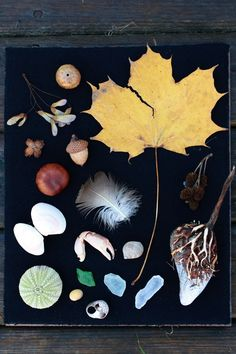 nature items in a black shadowbox...   fall collection