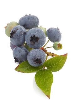 Fresh blueberries with leaves Art Print by Rosemary Calvert. All prints are professionally printed, packaged, and shipped within 3 - 4 business days. Leaf Prints, Art Prints, Blueberry Picking, Fruit Preserves, Colorful Fruit, Thing 1, Leaf Art, All Art, Fine Art America