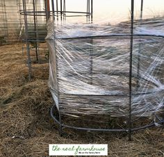 How to guarantee you'll have the first ripe tomatoes on the block! clear plastic food wrap for your tomato plant's own personal greenhouse.