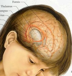 #Brain #Tumor #Treatment