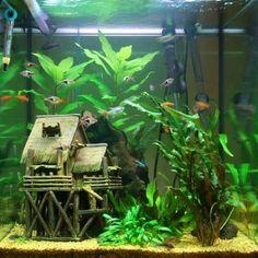 decorazioni acquario originali 22
