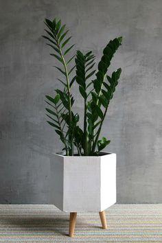 Tall Plants, Live Plants, Potted Plants, Pots For Plants, Indoor Green Plants, Inside Plants, Plant Aesthetic, Aesthetic Room Decor, House Plants Decor