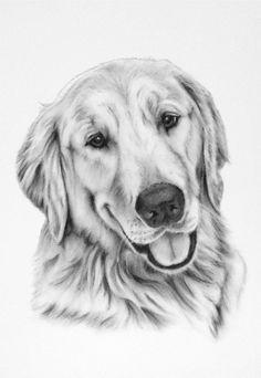 Pet Portrait, Pet drawing, Pet Sketch, Golden Retriever Pet Art Dog Art Photo to Sketch, Custom Pet Portrait Dog Drawing Pet Memorial - Dogs Dog Pencil Drawing, Pencil Art Drawings, Art Drawings Sketches, Sketches Of Dogs, Charcoal Drawings, Perros Golden Retriever, Golden Retriever Art, Animal Sketches, Animal Drawings