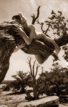 Two-Needle Pinyon Pine – Pinus edulis - Treegirl: Intimacy with Nature