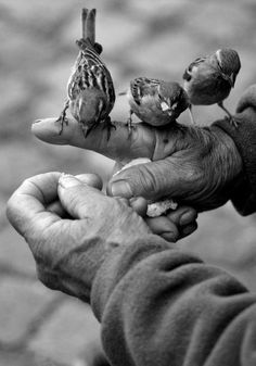 By Philippe Merle ✿ 'Les Mains' ✿ Hands ✿ Birds ✿ Black & White ✿ Black N White, Black White Photos, Black And White Photography, Merle, Tier Fotos, Jolie Photo, Bird Feathers, Beautiful Birds, Beautiful Soul