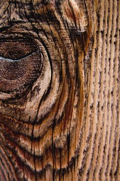 What looks like an eye and snout of a horse, is really a textured plank of lumber with a knot.
