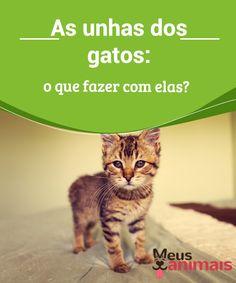 As unhas dos gatos: o que fazer com elas?   Antes de dar as #recomendações sobre o que fazer para que as unhas dos #gatos não sejam um #problema, é preciso refletir sobre a importância delas. #Conselhos