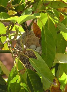 Author of Historical, Mystery & Womens' Fiction Finches, Keep An Eye On, Beautiful Places To Visit, Crete, Plant Leaves, Mystery, Fiction, Author, Island