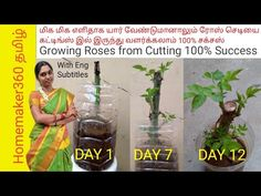 Rose Cuttings, Growing Roses, Kitchen Design, The 100, Success, Gardening, Day, Youtube, Design Of Kitchen