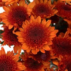 Gorgeous fall bridesmaids bouquets :) FiftyFlowers.com - Fall Orange Pom Flower